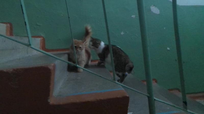 брачные игры котов в нашем подъезде