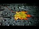 Дорога в Осень....