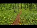 Весенний лес Расслабляющие звуки Пение птиц UHD Video 2160p
