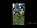 Видео похождений героев АТО Украина.добровольческого батальона Украинской добровольческой армии «Аратт».