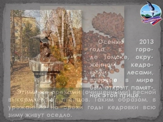 Выпуск 24_Кедровка