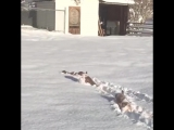 Когда снега много не бывает