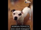 Пёс собирается на прогулку