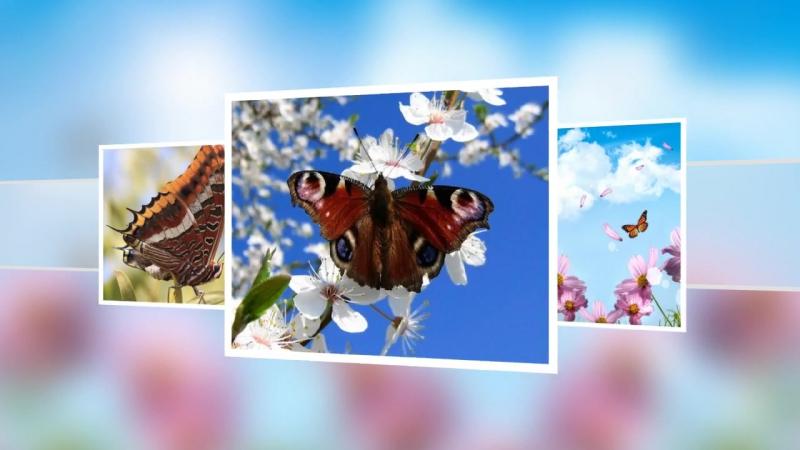 Красивая мелодия из фильма Полет бабочки