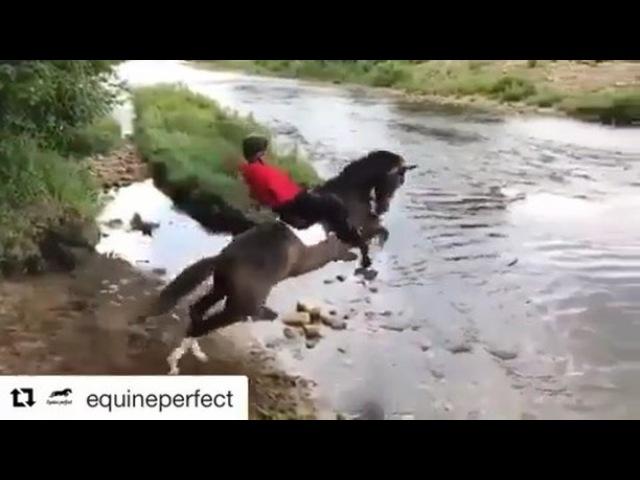"Equestrian Fails on Instagram: ""Seat for days😂 - horseshorsehorsebackridinghorsesofinstagramequestrianponyequinefailfall"""