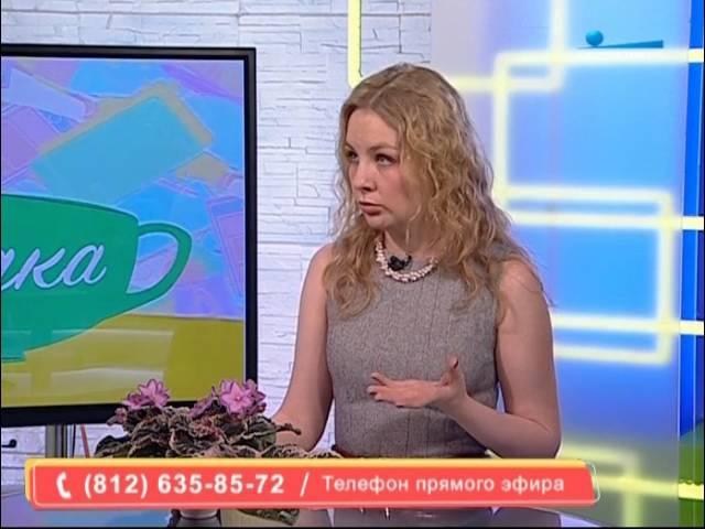 Передача Беседка о пестролистных фиалках с Полиной Кордик