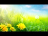 Relaxing Morning Music - Calming and Positive Feelings (Ashley)