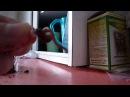 Как насадить на крючок навозного червя
