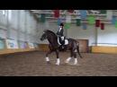 Elisaveta Horses
