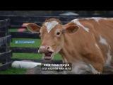 Сказка с переводом 1 (уровень А2) - A vaca que ri