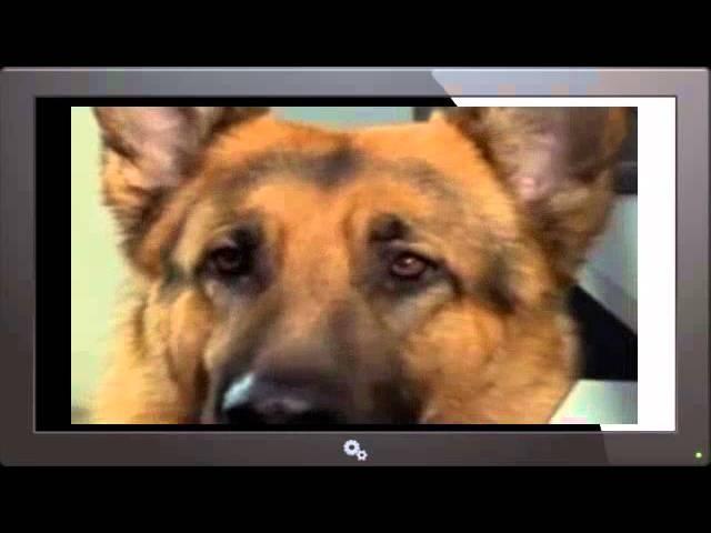 Kommissar Rex Staffel 6 Folge 4 deutsch german