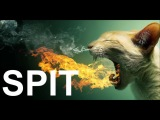 EXTREMELY HARD Trap Beat Hip Hop Rap Instrumental - Spit (Prod. Nico on the Beat)