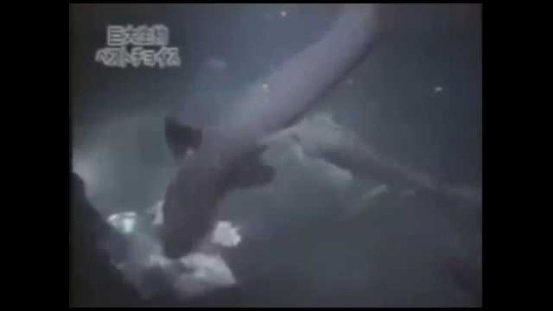 Огромная акула! Мегалодон? / A giant shark! Megalodon?