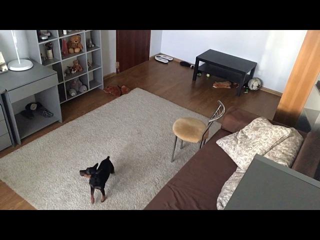 Собаку оставили одну дома