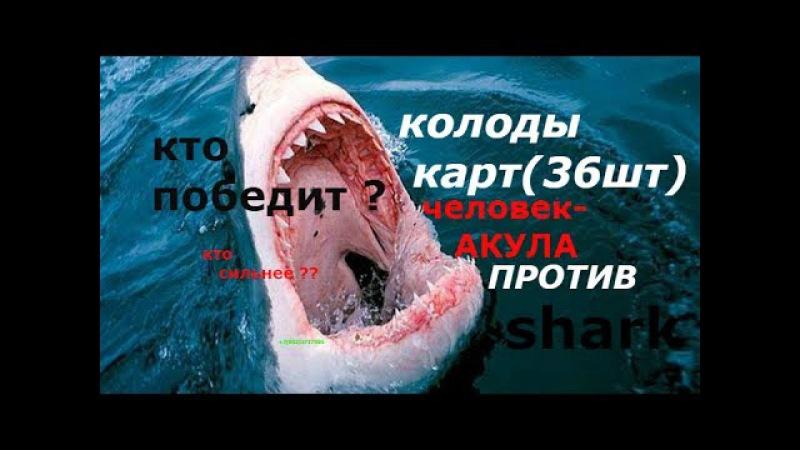 ЧЕЛОВЕК-АКУЛА !кто кого ?БИТВА С КОЛОДОЙ ИГРАЛЬНЫХ КАРТ ! man shark , steel jaws , the strong man