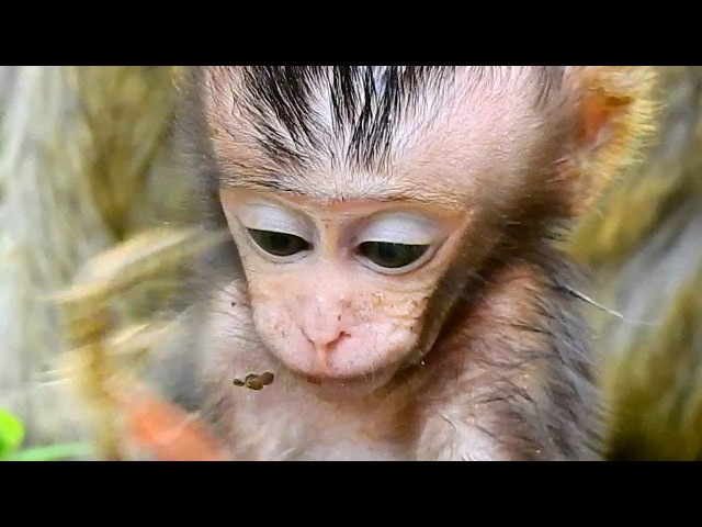 Little Cute Baby Monkey Eating Food - Baby Monkey Very Lovely