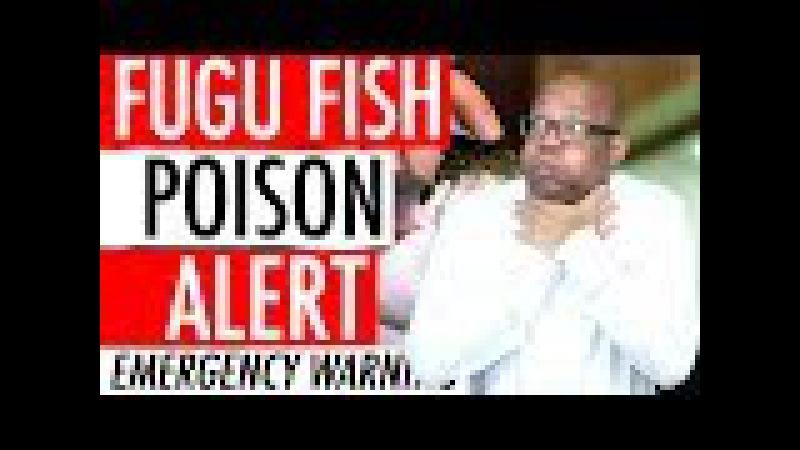 Fugu Puffer Fish Poison Alert 2018 - Deadly Blowfish Recall Activates Japan Emergency Warning 🐡 ⚠️