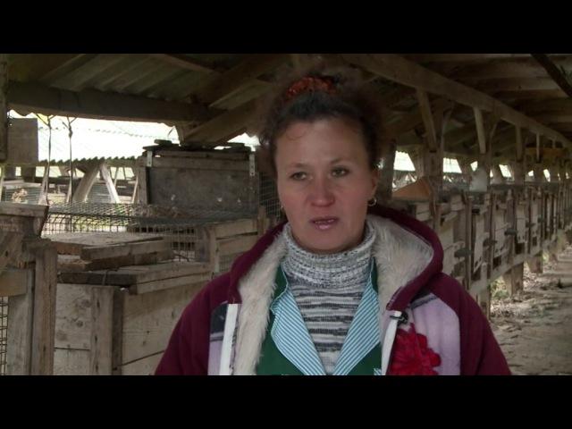 Домашняя ферма Лисы