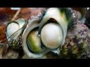 Japanese Street Food - GIANT SEA SNAIL Seafood Okinawa Japan
