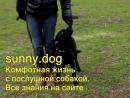 гиперактивная собака как правильно работать с гиперактивной собакой