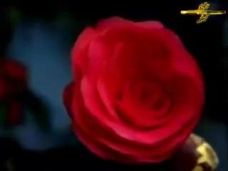 АЛЛА ПУГАЧЁВА - Миллион алых роз... ОЧЕНЬ КРАСИВЫЙ И СОДЕРЖАТЕЛЬНЫЙ КЛИП