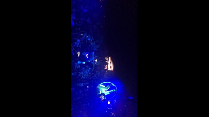Стелла Каримова — Live