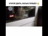 кот говорит открой мне дверь