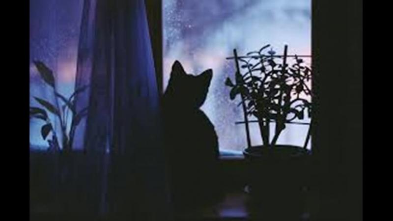 кошка кошка,не выглядывай в окошко...