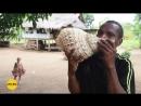 Папуа-Новая Гвинея, экспедиция Маклая. Сигнальные раковины