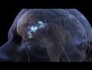 Механизм восприятия боли
