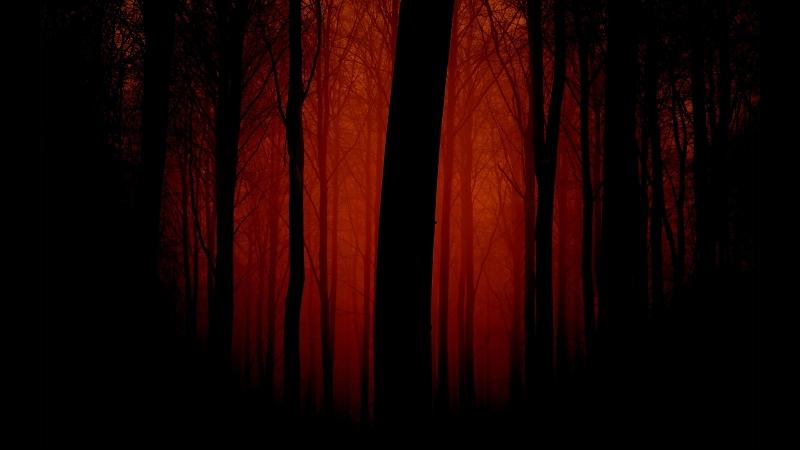 Одна смерть в лесу.