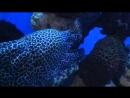 Океанариум. Мурена и рыба с пузом в горошек.
