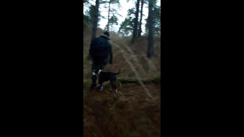 Прогулка в лесу с Зорро, Стешей и Фреем)