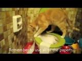 Кот гадит