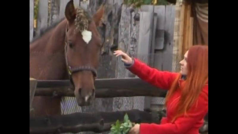 Голодающая лошадь