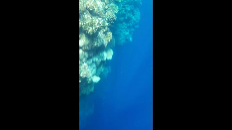 Подводный мир: