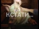 Нижегородские фермеры решили сами защитить свои хозяйства от Африканской чумы свиней