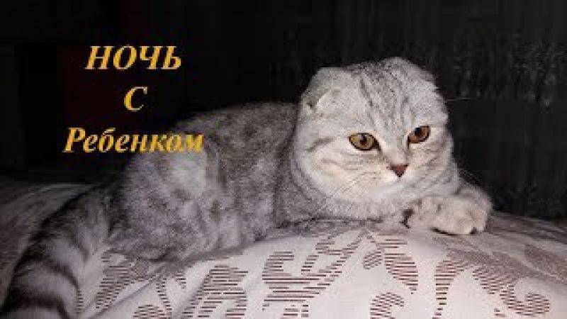 😻КОШКА ОХРАНЯЕТ НОЧЬЮ РЕБЕНКА 🐱 Добрая Кошка Скоттиш Фолд 🐱 Коты и Дети