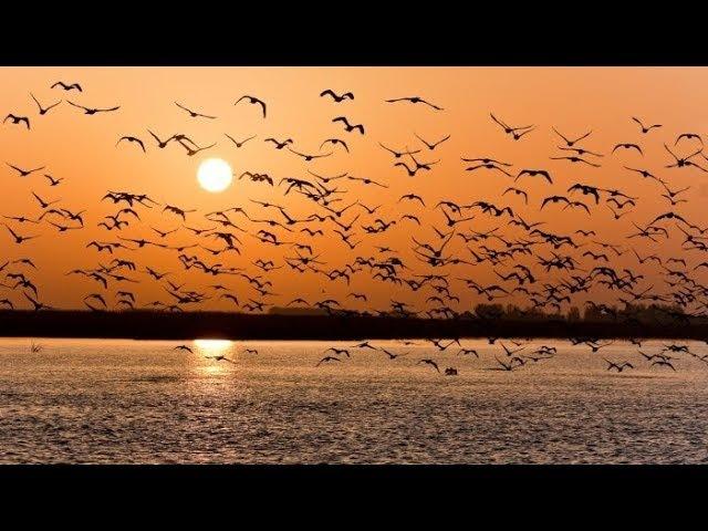 Птиц убивать нельзя - птицы участвуют в сотворении времени.