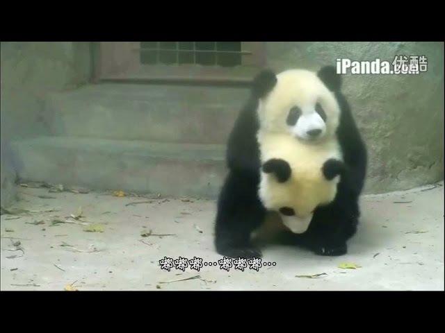 IPanda MV 嘟嘟歌 Doodle Meng Da Meng Xiao and friends