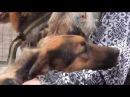 Защитник счастья ТВ - вакцинация собак в приюте Печатники (03.06.2017)