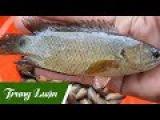 Một ngày trải ngiệm giăng lưới, câu cá rô đồng cực nhiều ở miền tây (Cà Mau) - Phần 3