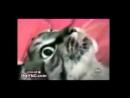 Смешные кошки приколы про кошек и котов 2017 22 старое и безумно смешное