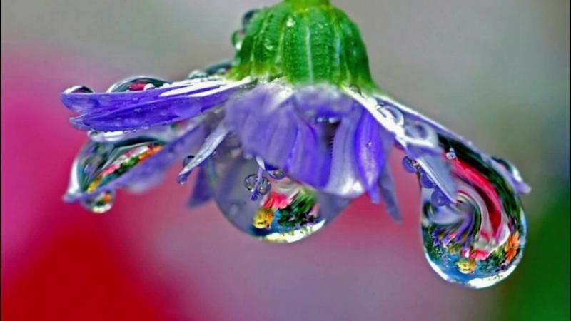 капли росы и дождя
