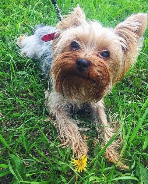 *** ПРОПАЛА СОБАКА ***  Пожалуйста помогите!!! Пропала собака на Свето