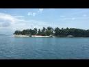 Philipine island Cowrie