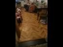 кошка играет с машинкой