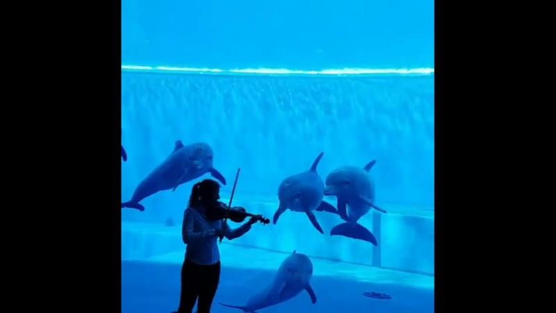 КУЧЕРЯВО♔-Волшебная музыка и дельфины