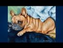 Французский бульдог French Bulldog