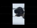 Сюзи Susi Собака зимой в Италии февраль 2018